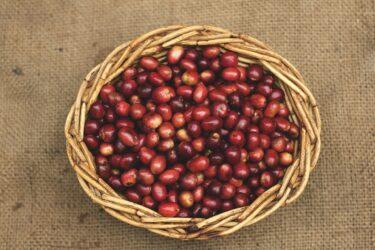 コーヒーは「精製方法」で味が変わる!?知っておきたい4つの精製方法