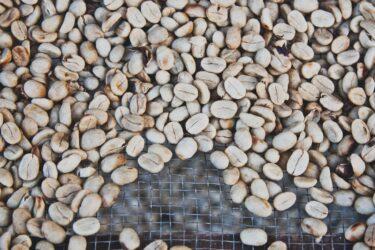 『アナエロビック』とは?コーヒー豆の加工法進化についてのお話
